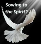 Sowing-Spirit-281x300