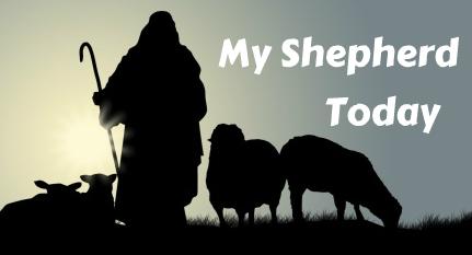 ShepherdSil2